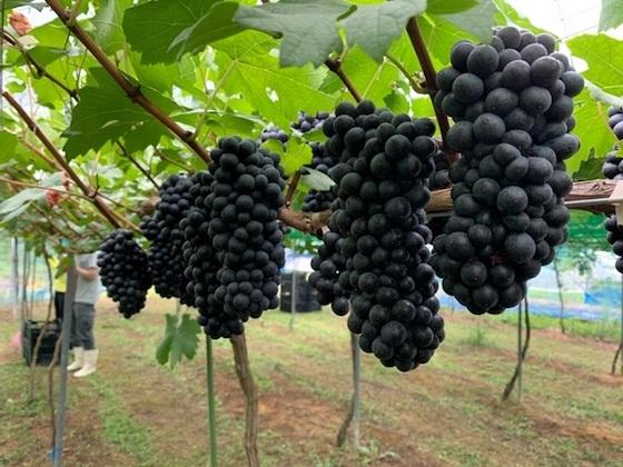 【新ファンド募集開始】「広島産ワイン」「老舗工具箱メーカー」