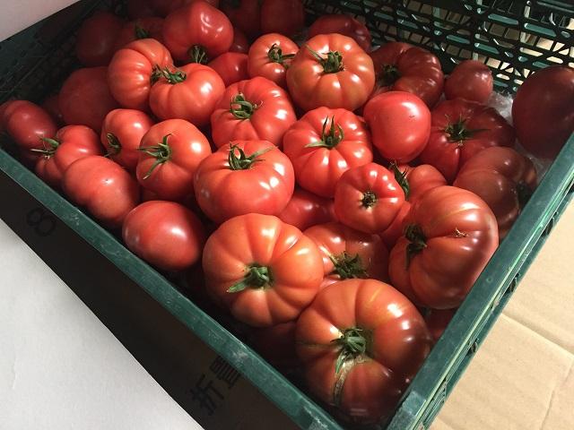 /data/fund/2865/tomato1.jpg