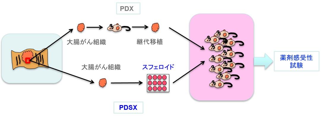 /data/fund/5257/PDSX.jpg