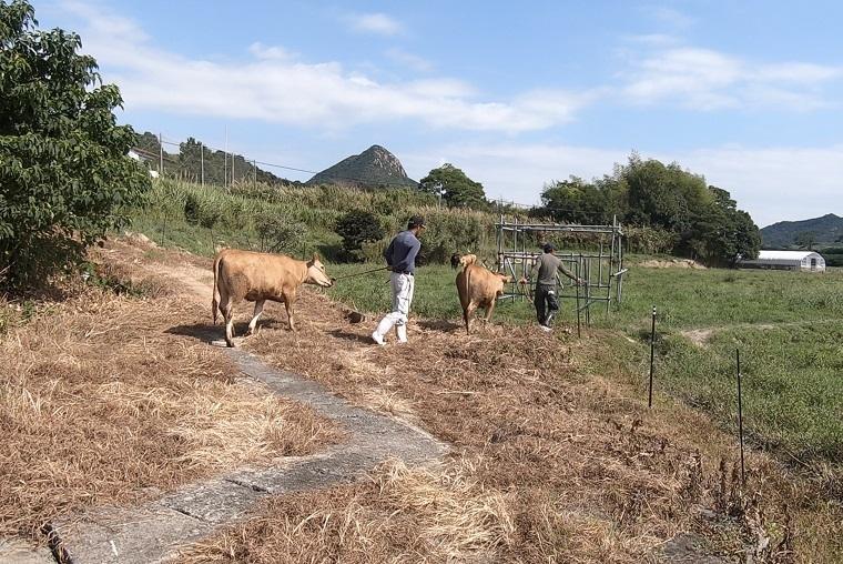 /data/fund/6868/cattle4.jpg